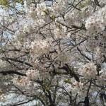 2013-04-01_115821.jpg